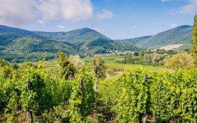 Votre domaine viticole dans le Bas-Rhin